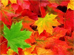 I LOVETANGO.it - Il portale italiano del tango - Milonghe in autunno