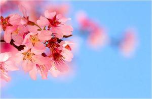 I LOVETANGO.it - Il portale italiano del tango - Milonghe in primavera